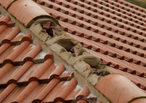 repairing-ridge-tiles-house-in-Bulcote-NG14 5